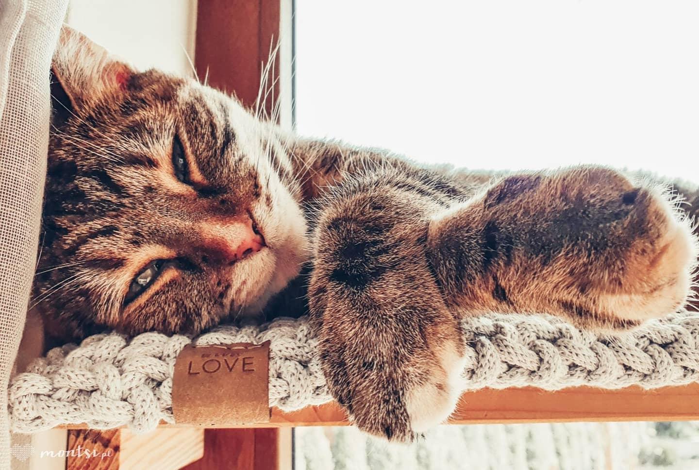 Tak, Rami często korzysta ze swojego parapeciaka. I chyba jest zadowolona 🐈🐈🐈  #catsandcrafts #cats_of_instagram #catstagram #ramithecat #ilovemycat #crochet #catpad #catbed #handmade #handmadedecorations #homeandgarden #crochetdecoration #cottoncord #crochetproject #friday #catlovers