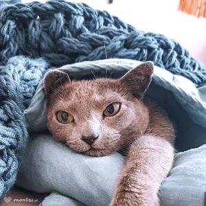 Niedzielne leniuchowanie ~ Montsi The Cat  #montsithecat #russianbluecat #mrbulky #catsandcrafts #montsicrafts #handcrafted #handmade #blanket #knittedblanket #blueyarn #imadethis #handmadedecorations #homedecor #homedecoration #sundayvibes #sundaychill #sunnyday